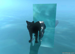 there is a small black cat on the water ground. There is very small white cat behind it. There is liquid behind it.