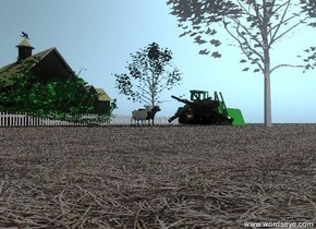 the hay texture is on the ground.  The cow-vp2234 is next to the small maple tree.  The large goat is next to the cow.  The barn is 20 feet behind the cow.  The white picket fence is in front of the barn. The fence is 120 feet wide.   the green bulldozer is 20 feet to the right of the goat. pine tree is 10 feet in front of the maple tree. the huge green rose bush is 5 feet to the left of the goat.  The huge campfire is 5 feet in front of the goat.