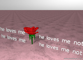 "There is a rose. The ground is light pink.  The ground is marble. The sky is white. The 2 feet wide ""he loves me"" is 5 inches to the left of the rose. The second 2 feet wide ""he loves me"" is above the ""he loves me"". The second ""he loves me"" is 3 inches above the ""he loves me"".The 2 feet wide ""he loves me not"" is 5 inches to the right of the rose. The second 2 feet wide ""he loves me not"" is above the ""he loves me not"". The second ""he loves me not"" is 3 inches above the ""he loves me not""."