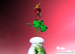 the shiny red rose is in the tiny flower vase. the sky is pink. the sun is blue. The violet light is ten feet  in front of the vase. the green light is 4 feet above the rose. The bird is ten feet behind the vase, it is 5 feet above the rose. it is partly cloudy. the 3 inch tall yellow man is on the rose.