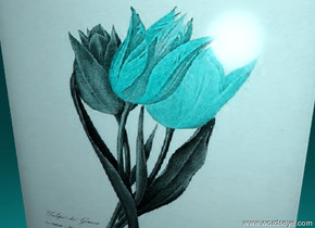 cyan tulip. the ground is cyan.