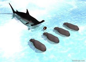 the 4 hippos are in the water ground. the large football is 2 feet in front of the hippos. the huge shark is 6 feet in front of the hippos. it is facing the hippos. the hippos are four feet apart. the football is on the ground.