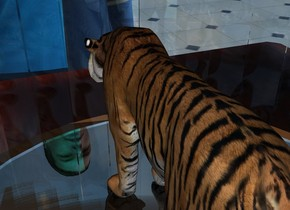 the ground is shiny tile. the tiger fits in a bell jar. the jar is on the table. a yellow light is a inch above the tiger.  a tiny cyan light is 2 inches right of the tiger.  the  three foot tall man is in front of the table. he is facing the table.