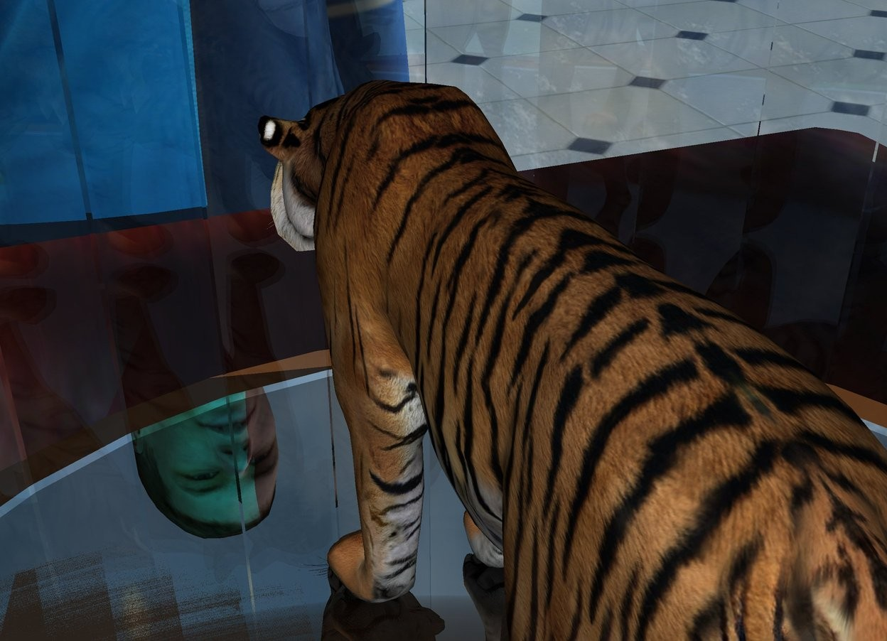 Input text: the ground is shiny tile. the tiger fits in a bell jar. the jar is on the table. a yellow light is a inch above the tiger.  a tiny cyan light is 2 inches right of the tiger.  the  three foot tall man is in front of the table. he is facing the table.