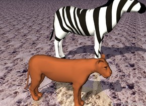 The lion is five feet from a zebra and the sky is blue  and the ground is sand