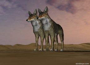 wolf stands opposite wolf