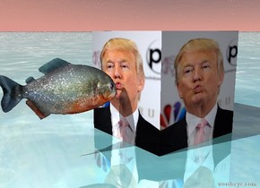 The [trump] cube.  The shiny ground is water.  The fish is to the left of the [trump] cube.  The fish is facing the [trump] cube.  The fish is 4 inches in the air.  The fish is 2 centimeters away from the [trump] cube.