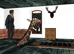 Ground is wooden and unreflective. The wall is white. The giraffe is 12 feet in the ground. it is 1 foot in front of the wall. the giraffe is facing the wall. a big mirror is in front of the wall. it is 1 foot above the ground. There is a huge wood floor on the wall. there is a second wall left of the wall. the second wall is facing left. it is very long.  the big head is to the right of the mirror. it is 4 feet above the ground. it is 1 foot away from the mirror. the couch is to the left of the mirror. it is on the ground. it is 2 feet in front of the mirror. the end table is below the head. it is in front of the head. it is on the ground. the rug is to the right  of the giraffe. it is -1 inches above the ground. the  white light is .5 foot above the giraffe. it is behind the giraffe. the woman is next to the giraffe. she is on the ground. she is facing the giraffe.