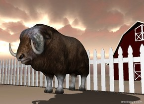 the musk ox. the ground is dirt. it is cloudy.  the fence is behind the musk ox. it is 50 feet wide. the small barn is 20 feet behind the musk ox.