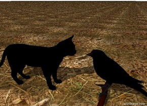 the black cat. the ground is dirt. it is cloudy.  the large black bird is  3 inches in front of the cat. it is facing the cat.