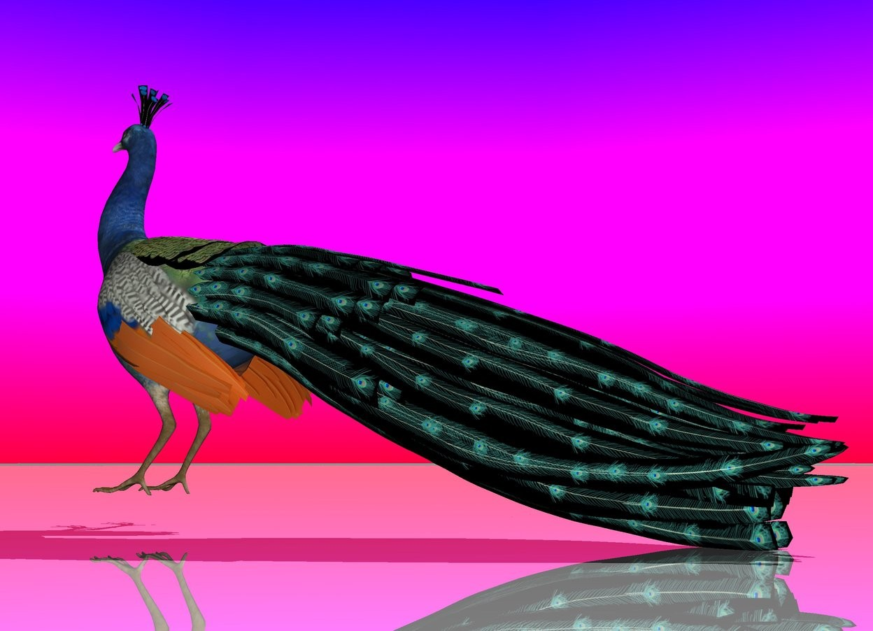 Input text: the peacock. the sky is rainbow. the ground is shiny.
