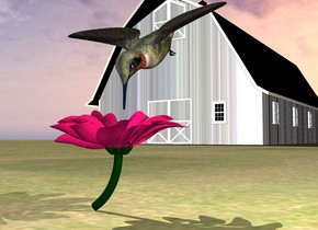 the large bird is above the flower. the bird is facing down. the bird is  behind the flower. the ground is grass. it is cloudy.  the small wood barn is 20 feet behind the flower. it is to the left of the flower.  the roof of the barn is black.  the gray light is to the right of the bird.
