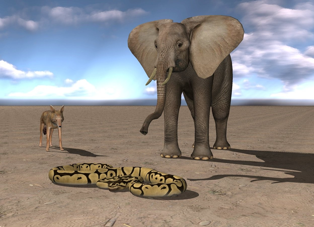 Input text: the python is in front of the elephant. the ground is dirt. it is cloudy. the jackal is 4 feet left of the elephant. it is facing the snake.