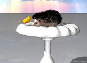 the hedgehog is in the bird bath. it is facing left.