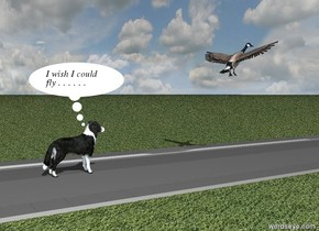 the border collie is on the very long grey road. the wide sky is cloudy. the ground is grass.   the very large bird is three meters in front of the dog. the bird is two meters above the ground