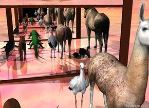 The very wide mirror is on the glass ground. The ten small animals are 2 foot in front of mirror. The very wide mirror is 7 foot in front of it.