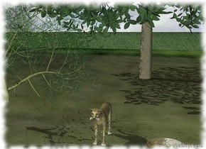 A big cat in the field. the ground is grass. the tree on the left of the big cat. the second tree behind of the tree. it is 3 feet behind the big cat. a puddle. it is 3 feet on the right of the big cat.the puddle has the [poddle] texture