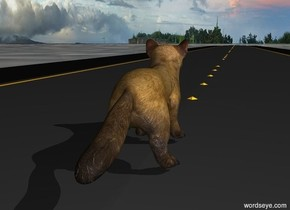 american marten is on an extremely long road. The ground is ocean