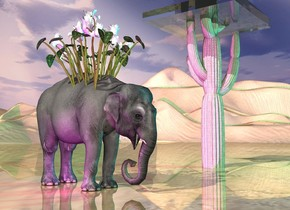 the elephant is 12 feet left of the 20 foot tall succulent.  the very huge flower plant is 2 feet in the elephant.  the cyan light is ten feet in front of the plant. it is 20 feet right of the plant. the magenta light is left of the elephant.  The enormous transparent cube is -5 feet above the succulent. it is one foot tall.  the ground is  tall and shiny.