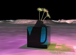 the 2 foot tall flower is in the transparent cyan cube.   a magenta light is above the flower. a yellow light is left of the pink light.  the sky is black