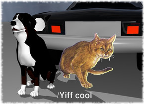 the dog is next to a cat. the transparent car is behind the cat.