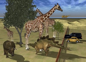 1st  large giraffe is -6 feet left of a 1st tree. it faces southwest. 2nd giraffe is -6 feet left of a 2nd tree. the 2nd tree is 7 feet southwest of the 1st tree. a 1000 feet long fence is right of the 1st tree. it faces right. 1st car is right of the fence. it faces left. the ground is grass. 2nd car is 2 feet in front of the 1st car. it faces left. 3rd large giraffe is -1 feet left of the fence and 3 feet in front of the 2nd giraffe. it faces right. a triceratops is -7 feet left of and 1 feet in front of the 3rd giraffe.it faces southeast. a stegosaurus is -1 feet right of and 2 feet to the front of the 2nd tree. it is facing left. a pterodactyl is 19 feet above the fence. it faces southwest. it leans front.