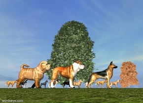 A 10 foot tall german shepherd is facing a 10 foot tall tree. The german shepherd is behind the tree. A 10 foot tall dog is behind it. A 10 foot tall dog is behind it. A 3 foot tall dog is behind it. A 3 foot tall dog is in front of it. A 3 foot tall dog is in front of it. A 3 foot tall dog is in front of it. A 3 foot tall dog is in front of it. A 3 foot tall dog is in front of it. A 3 foot tall dog is in front of it. A 3 foot tall dog is in front of it. A 3 foot tall dog is in front of it. A 3 foot tall dog is in front of it.  A tree is next to each dog. The ground is grass.