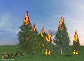 A pine tree is on the grass ground. A 20 foot tall flame is -10 feet above it. A 10 foot tall flame is -20 feet above it. A 10 foot tall flame is -30 feet above it. A 10 foot tall flame is next to it.  A spruce tree is next to the pine tree. A 20 foot tall flame is -10 feet above it. A 10 foot tall flame is -20 feet above it. A 10 foot tall flame is -30 feet above it. A 10 foot tall flame is next to it.  A fir tree is behind the spruce tree. A 20 foot tall flame is -10 feet above it. A 10 foot tall flame is -20 feet above it. A 10 foot tall flame is -30 feet above it. A 10 foot tall flame is next to it.  A birch tree is next to the spruce tree. A 20 foot tall flame is -10 feet above it. A 10 foot tall flame is -20 feet above it. A 10 foot tall flame is -30 feet above it.  A pine tree is in front of the birch tree. A 20 foot tall flame is -10 feet above it. A 10 foot tall flame is -20 feet above it. A 10 foot tall flame is -30 feet above it. A 10 foot tall flame is next to it.  A birch tree is in front of the birch tree. A 20 foot tall flame is -10 feet above it. A 10 foot tall flame is -20 feet above it. A 10 foot tall flame is -30 feet above it. A 10 foot tall flame is next to it.  A cedar tree is in front of the birch tree. A 20 foot tall flame is -10 feet above it. A 10 foot tall flame is -20 feet above it. A 10 foot tall flame is -30 feet above it.  10 deer are standing next to the cedar tree.
