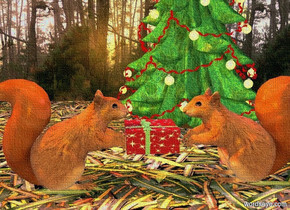 a 1st 2 foot tall squirrel is facing right. it is 0 inches above a [leaf] floor. a 2nd 2 foot tall squirrel is 1 foot to the right of the 1st squirrel. the 2nd squirrel is facing the 1st squirrel. a christmas tree is 0 inches above and -8 feet behind and -9 feet to the right of the  floor. a [forest] wall is -.1 inch behind the floor. a 6 inch tall present is -1 inch to the right of the 1st squirrel. it is .8 foot over the ground. the ambient light is dim linen. the camera light is gold. a copper light is 1 inch over the 1st squirrel. a mauve light is 1 inch over the 2nd squirrel. the sun is dim copper.