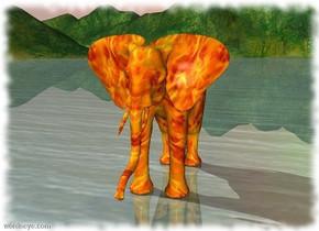 head  cactus fire   african elephant