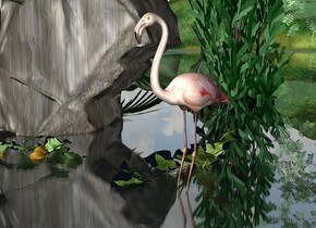 a flamingo is 0.3 feet in the river. it faces southwest. the river is clear. 1st tree is 8 feet behind the flamingo. it is 8 feet in the ground. 2nd tree is 4 feet behind and 0.1 feet right of the flamingo. it is 5 feet in the ground. a dwarf palm is 0.1 feet  behind and 1 feet to the left of the flamingo. a rock is 1 feet behind and 0.5 feet to the left of the flamingo. a cucumber is 0.1 feet in front of the rock. it is -0.2 feet to the right of the rock. a squash is 0.1 feet in front of the rock