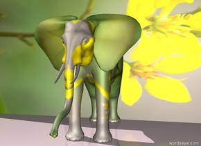 [flower] african elephant  is in front of a  large [flower] wall. The ground is  [flower]