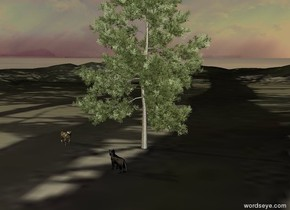 The large [tabby] cat is left of the small pine tree.  The small pine tree is in the [forest] mountains.  It is dusk.  The large black cat is in front of the pine tree.  The black cat is facing the [tabby] cat.  The [tabby] cat is facing the black cat.