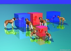 1st tiny dog is 2 inches east of 1st shiny blue cube. it is facing west.   2nd tiny dog is facing west. It is  1 inch east of 2nd shiny blue cube. 1st cube is 2.5 feet in front of 2nd cube.   1st small shiny red cube is 2 feet east of 1st shiny blue cube.   2nd shiny red cube is .25 feet behind 1st shiny blue cube.  3rd tiny dog is 2 inches east of 2nd shiny red cube. It is facing west.  4th very tiny dog is south of 1st small shiny red  cube. it is facing north.  5th very tiny dog is 1 inch east of 1st small shiny red cube. It is facing west.  6th very tiny dog is south of 2nd shiny blue cube. It is facing south.  7th tiny dog is south of 1st shiny blue cube. it is facing north.   The ground is shiny green. The sky is shiny blue.