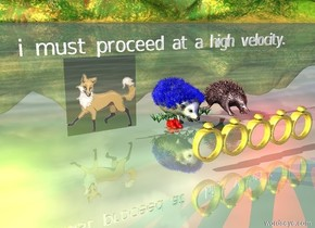 "the blue hedgehog stands on the grass. there are 5 very large gold rings 1 foot in front of the hedgehog. there are 2 very small red shoes under the hedgehog. 4 inches to the left of the hedgehog is a very small orange fox. 4 inches to the right of the hedgehog is a small red echidna. a red light is 3 inches to the right of the echidna. a yellow light is 3 inches to the left of the fox. 4 inches above the hedgehog is very tiny white ""i must proceed at a high velocity."""