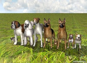 10 dogs. [grass] ground