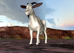 There is a goat.