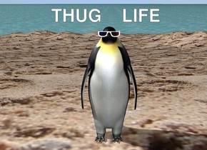 There is a penguin. Headwear is 5 centimeters in the penguin. headwear is 0.001 centimeters in front. the penguin is on an island. the island is sand. the ground is water. there is a 2 feet behind and 2 feet to the left of the penguin.