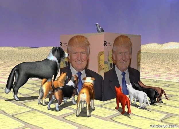 Input text: [trump]cube.a akita inu is 1 feet  in front of the cube.the cube is 4 feet tall.the akita inu is facing the cube.a basset hound is right of the akita inu.the basset hound is facing the cube.a border collie is left of the akita inu.the border collie is facing the cube.a bulldog is right of the basset hound.the bulldog is facing the cube.a cat is 1 feet right of the cube.the cat is facing the cube.a house cat is in front of the cat.the house cat is facing the cube.the house cat is black.a white cat is in front of the house cat.the white cat is facing the cube.the sun's altitude is 90 degrees.a rust cat is in front of the white cat.the rust cat is facing the cube.the ground is brick.a parrot is on the cube.a violet light is above the parrot.