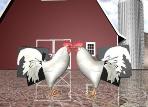 There are two cocks. the cock is facing the cock.the cock is facing the cock. there is a barn 30 feet behind the cock. the ground is hay.