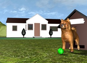 The dog is in front of the dog house. the ground is grass. there is a house 2 feet behind and 2 feet to the left of the dog house. the house is facing southeast. the ground is unreflective. there is a ball in front of the dog.