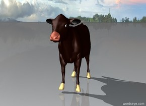 a cow stands alone