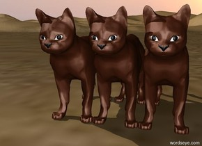 a cat. a cat. a cat