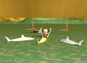 a shark.the ground is water.the shark is 1 feet in the ground.a second shark is 1 feet left of the shark.a third shark is 4 feet right of the shark.the second shark is facing southeast.the third shark is facing southwest.a man is 2 feet in front of the shark.the man is -1 feet left of the shark.the man is 3 feet in the ground.the man is facing north.a boat is 6 feet in front of the man.the boat is facing left.the sun is orange.