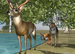 The ground is grass. A 0.5 meter tall wolf is standing on the ground. A 0.25 meter tall red fox is standing next to it. A 0.25 meter tall coyote is standing next to it. A 0.75 meter tall deer is standing 0.4 meters in front of the wolf. A 10 meter wide lake is next to the wolf. The lake is 1 centimeter tall. A 5 meter tall birch tree is behind the wolf. A spruce tree is to the left of the deer. A mushroom is 0.25 meters in front of the wolf. A 10 meter tall spruce tree is 0.5 meters behind the lake. A 10 meter tall birch tree is next to it. 5 10 meter tall spruce trees are next to it.