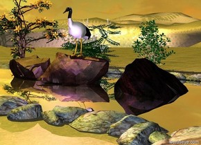 a river.the river is 50 feet deep.a first rock is in the river.a second rock is 6 inches left of the rock.a bird is -4 inches above the first rock.a third rock is 7 inches right of the first rock.a lavender light is in front of the bird.the ground is grass.a 5 feet tall bush is 8 feet behind the bird.the bush is on the ground.a 6 feet tall mahonia is 1 feet left of the bush.a clematis is 3 feet left of the mahonia.the river is silver.the camera light is grey.the sun is lemon.