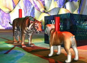 the large dog is on the very tall desert.  the renoir texture is on the desert. it is 30 feet wide.  the first enormous firecracker is 2 inches in the dog.  the large tiger is one foot in front of the dog. it is facing the dog. the second enormous firecracker is 2 inches in the tiger.  the red light is above the first firecracker. the cyan light is above the second firecracker.   the huge clear crate is three feet left of the dog. it is in front of the dog. the sun is coral