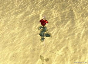 A giant rose is 3 inches above the gold water. The sky is metal. A big nose is 3 inches above the rose