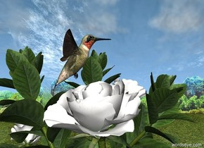 The hummingbird is 7 centimeters in the flower. The flower is in a garden.