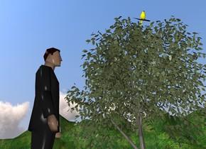 man. yellow bird. the man is facing the yellow bird. the yellow bird is on a tiny tree.